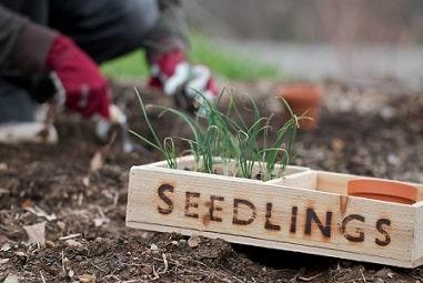 Best Seedlings