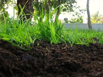 Compost Mulch