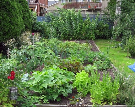 Green Vegetable Garden