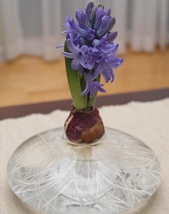 Hyacinth Bulb Vase