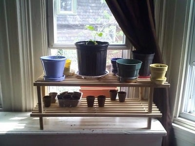 Indoor Container Garden