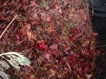 Make Leaf Mold