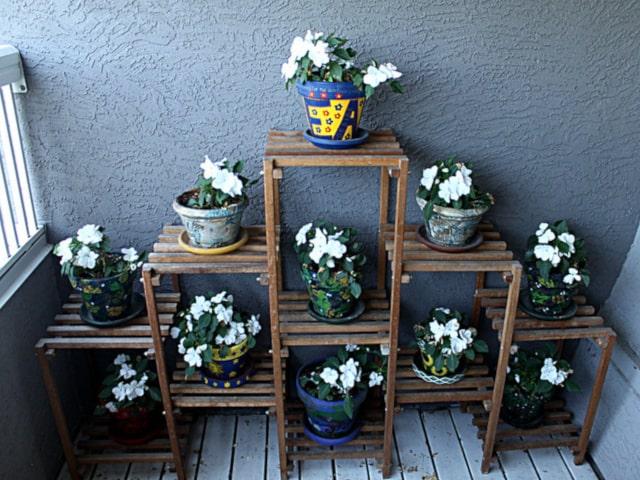 Impatiens as Potted Plants