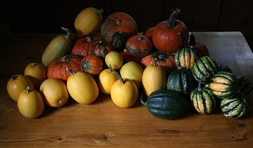 Squash Vegetables