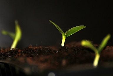 Starting Seedlings